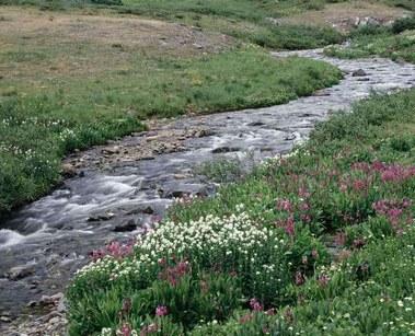 Petite riviere